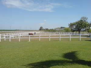 horse rail fence 301
