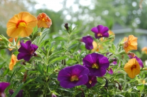 flowers 778333 1920