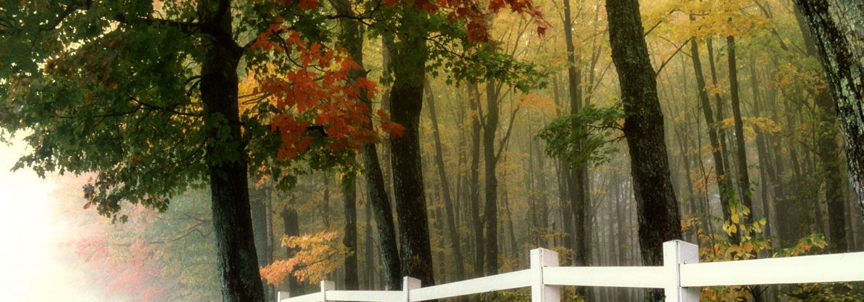 vinyl fence in the autumn with trees around it