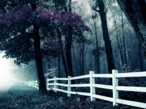 How To Prepare Your Backyard For Practical Fence Installation