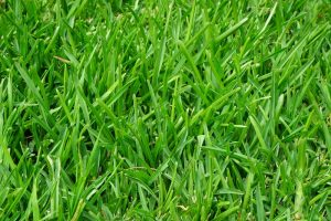 grass growth plant lawn meadow green 957484 pxhere.com