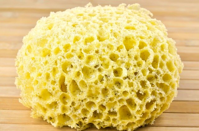 sponge for washing